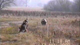 Pomiechówek Hubertus.2000.cz 1 -1/2