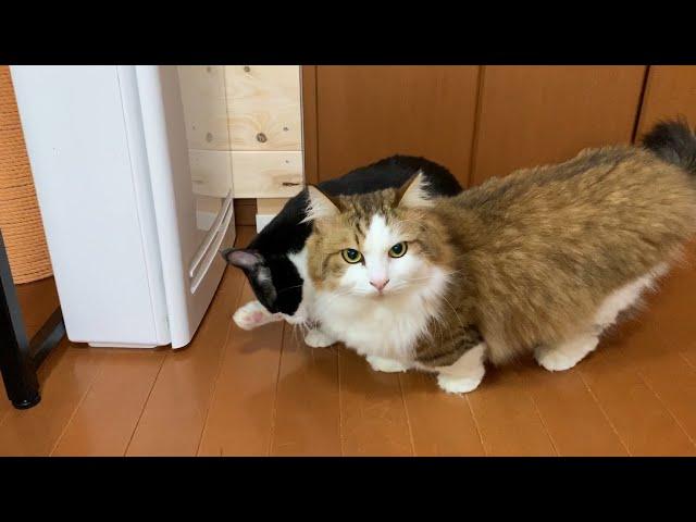 心配そうに嫁さんの様子を伺う猫