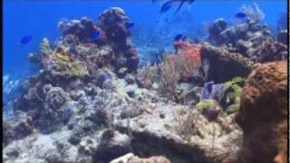 Cozumel Scuba  Santa Rosa reef  Blue Angel Resort Tony Vilet PADI