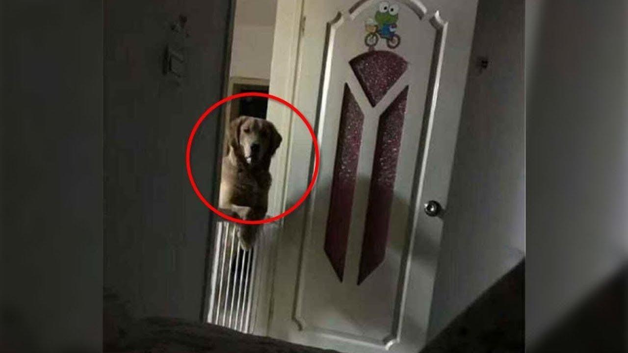 رجل لاحظ أن كلبه يراقبه كل ليلة أثناء نومه قبل أن يكتشف الحقيقة المفجعة