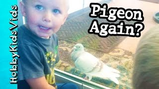Pigeon Returns! HobbyKids Give Him Water + HobbyPuppy Chases HobbyKidsVids