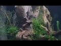 AKVARIKA | akvariumai ir žuvelės 🐚