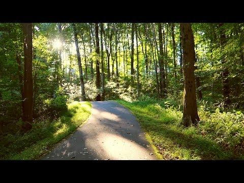🐸 A Sunrise Walk In the Woods🦊 Nature Sounds/No Talking🐦 Shinrin-yoku