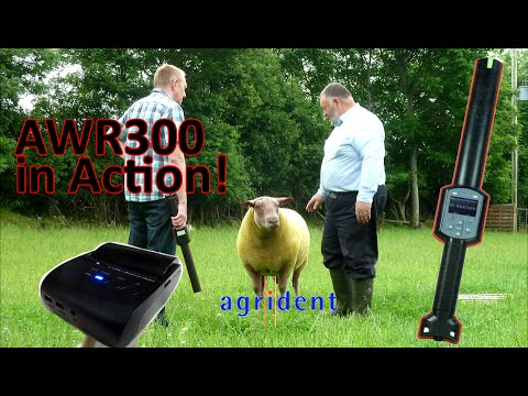 Download Agrident AWR300 in action - the best sheep EID management wand reader on the market!