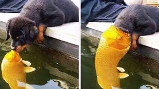 2019「絶対笑う」最高におもしろ犬猫動物のハプニング 失敗画像集 114