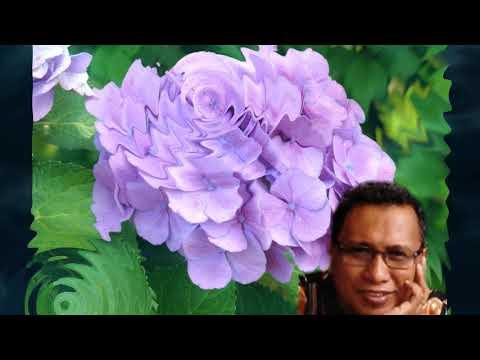 John Tanamal - Kau Yang Terakhir (Special Request)