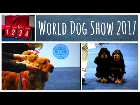 World Dog Show 2017 | Best Puppy, Best Couple, Best Breeders Group English Cocker Spaniel
