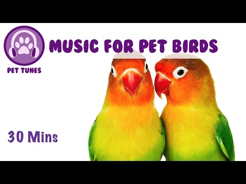 Music for Pet Birds! Lovebird Music, Calm Down Your Pet Birds, Stop Birds Squawking, Cure Anxiety