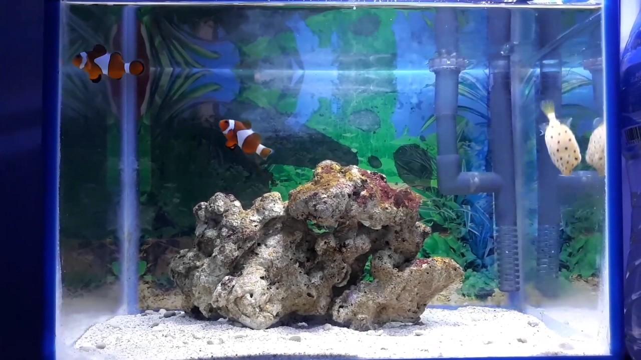 Aquarium Ikan Hias Laut Mini