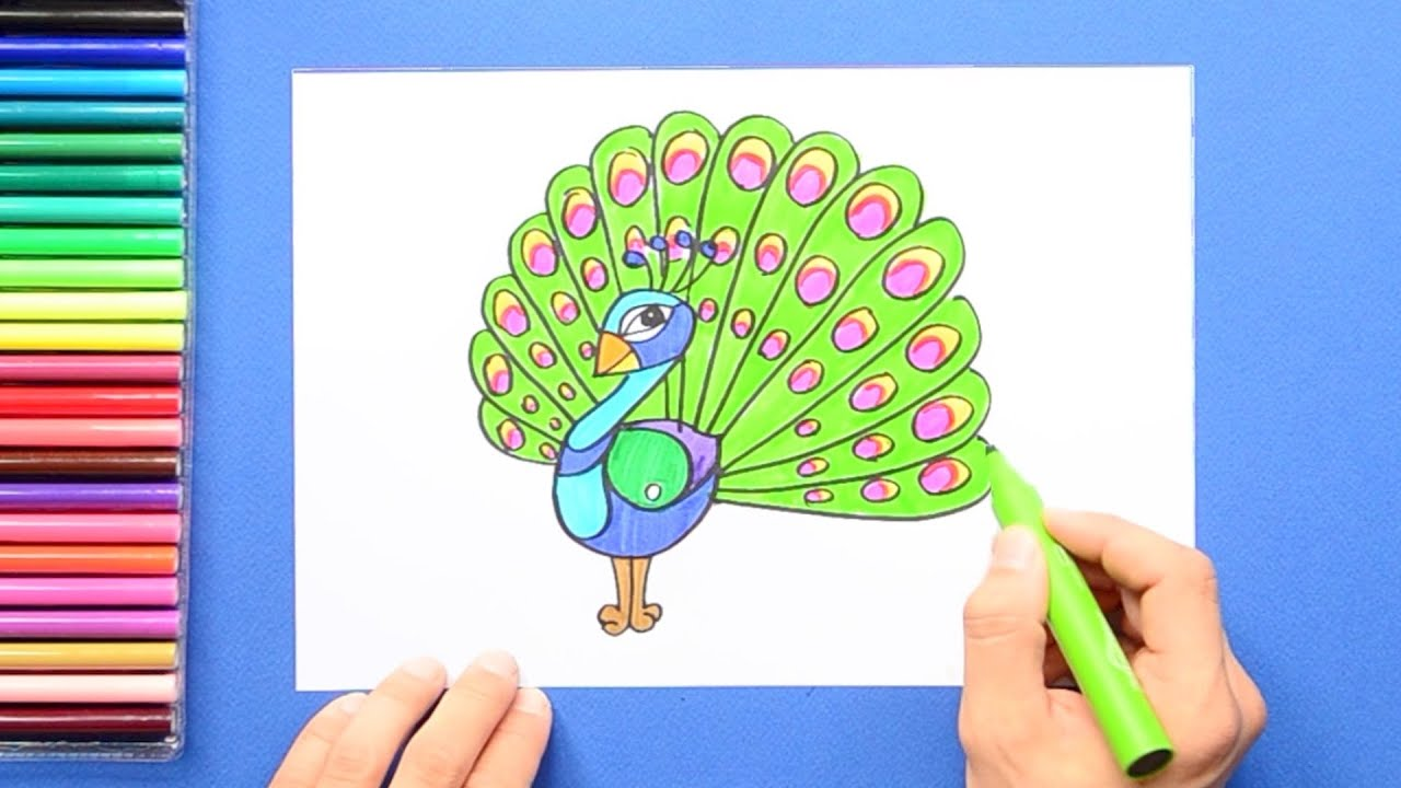 how to draw and color a peacock youtube