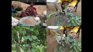 Medicinal Rice P5 Formulations for Dunbaria Overdose: Pankaj Oudhia