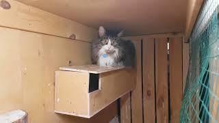 Котик Мурлок пришёл в гости в сычевальню к домовым гнусям.