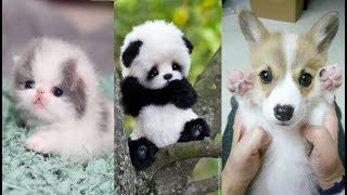 Cute baby animals Videos Compilation cute moment of the animals - Soo Cute! #7