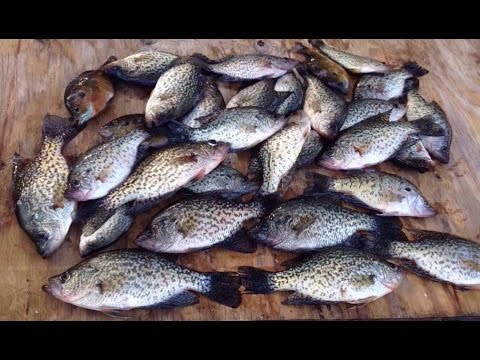 The Start Of March Madness - March/3/2017 Crappie Fishing