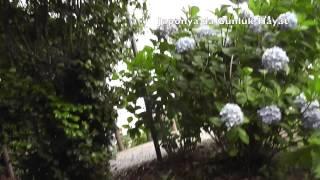 Japonya'da Günlük Hayat Ortanca bahçesine gittik :) Blogum: http://...