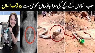 Janwaro K Pait Say Milnay Wali Ajeeb Cheezain | Unusual Thing Found in Animals' Stomach | NYKI