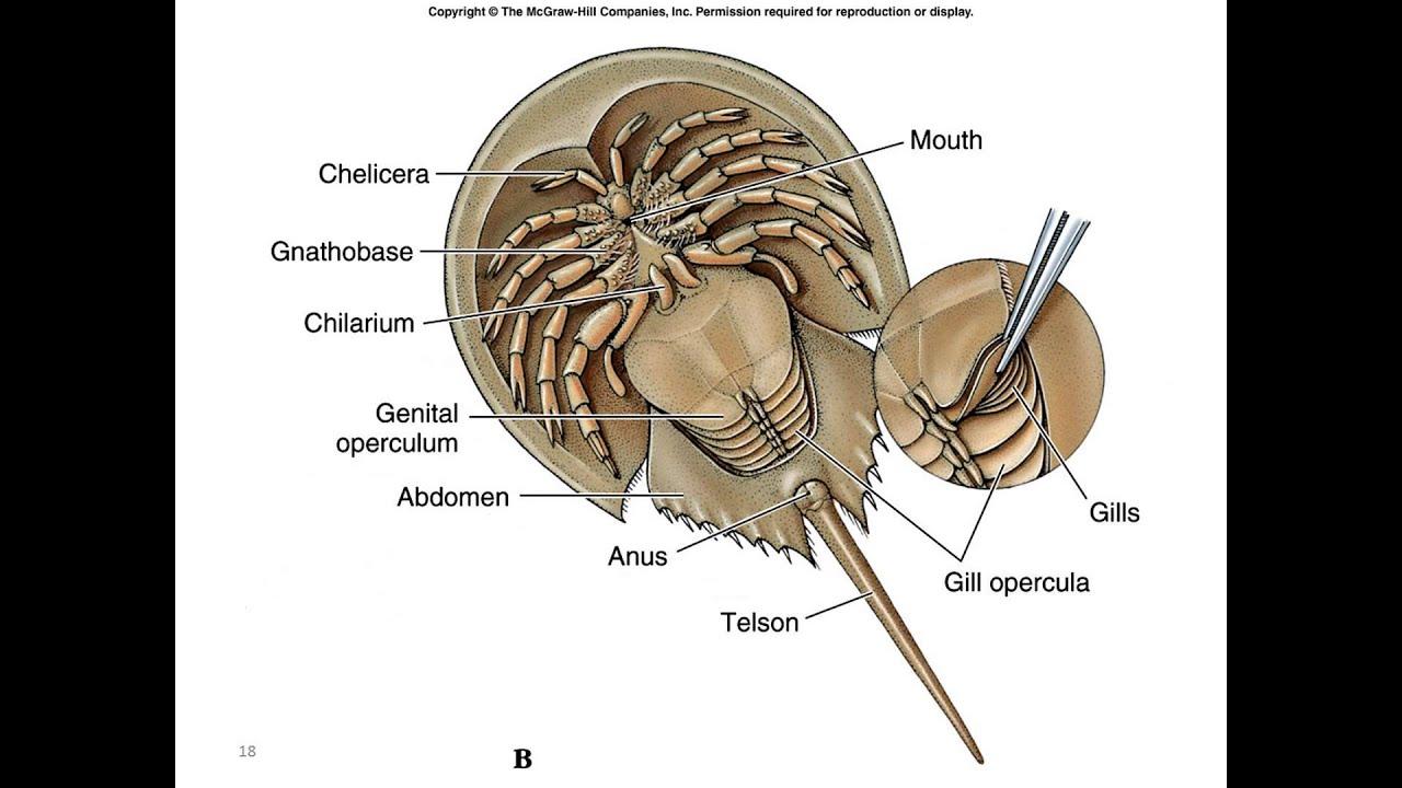 phylum arthropoda part 1 [ 1280 x 720 Pixel ]