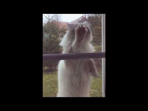 Funny cat comes back