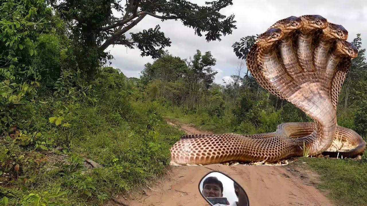 фото огромные кучи змей привозят турции друзьям