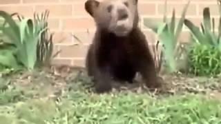 Медведь чихает прикол, ржака, 100500, страх, жесть, вдв, драка, фильм, секс, подборка, секс, украина