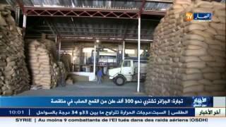 تجارة: الجزائر تشتري نحو 300 ألف طن من القمح الصلب في مناقصة
