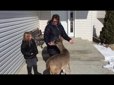 Friendly deer comes back