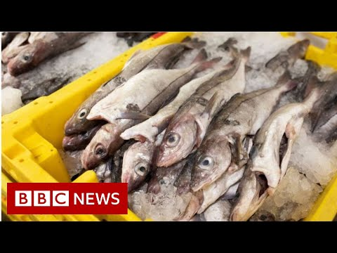 Brexit: Why is fishing a stumbling block in the trade talks? - BBC News