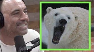 Joe Rogan - Polar Bears are RUTHLESS
