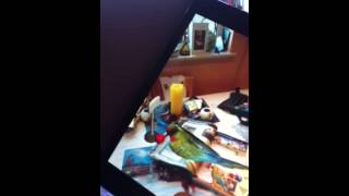 3D Parrot -Guinness world records book 2013