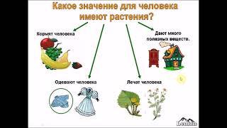 'Разнообразие растений'