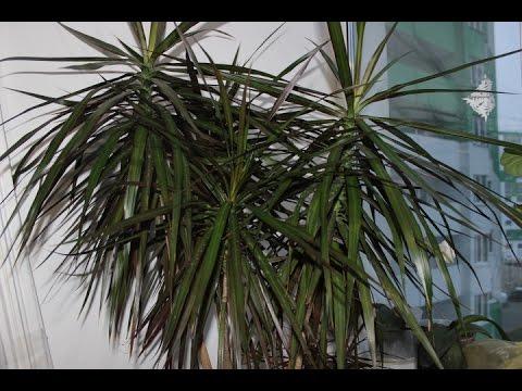 Наши комнатные растения. Ч.2