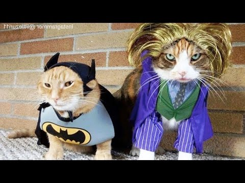 CATS in Ridiculously Adorable COSTUMES [Funny Pets]