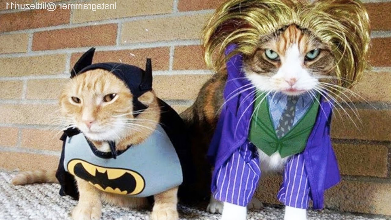 & CATS in Ridiculously Adorable COSTUMES [Funny Pets] - YouTube