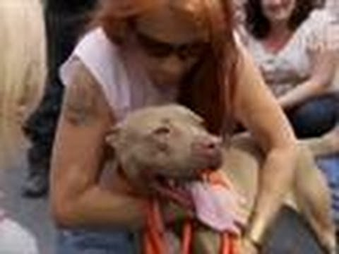 Prada Gets Rescued | Pit Bulls and Parolees