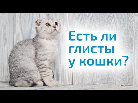Как узнать что у кошки глисты