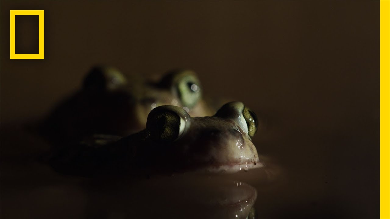 Romantic Toad Romp | Untamed Americas