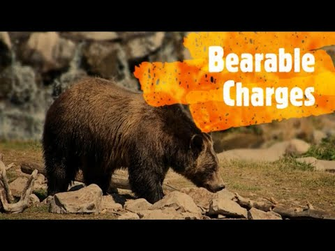 Hunting Unlimited: Bearable Charges |