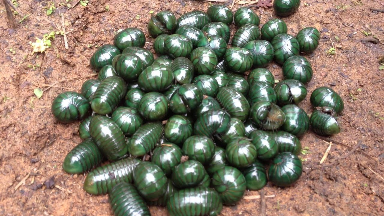 Green tesla pill report