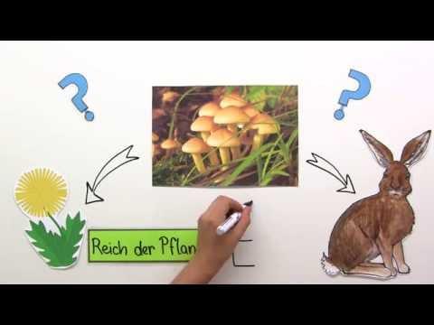de2. Die Martinus-Kosmologie in aller Kürze - Ole Therkelsen auf Deutschиз YouTube · Длительность: 11 мин27 с