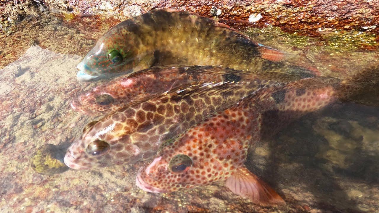 无人岛跑进石斑鱼群,个个昂贵价值不菲,阿彬撞见一窝端