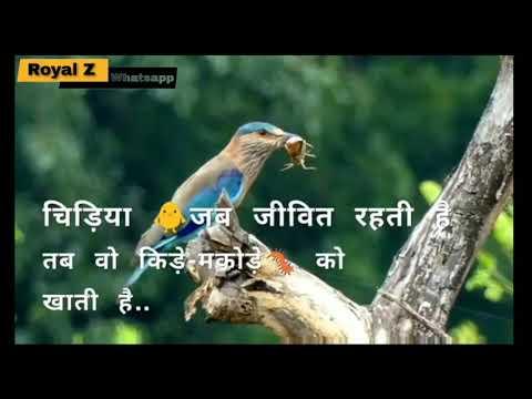 Ego Motivational Quotes Status Shayari || Royal Z Whatsapp Status ||
