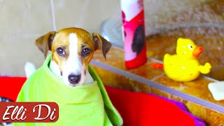 КАК ПОМЫТЬ СОБАКУ ГРЯЗНУЛЮ УХОД ЗА СОБАКОЙ Elli Di Собаки