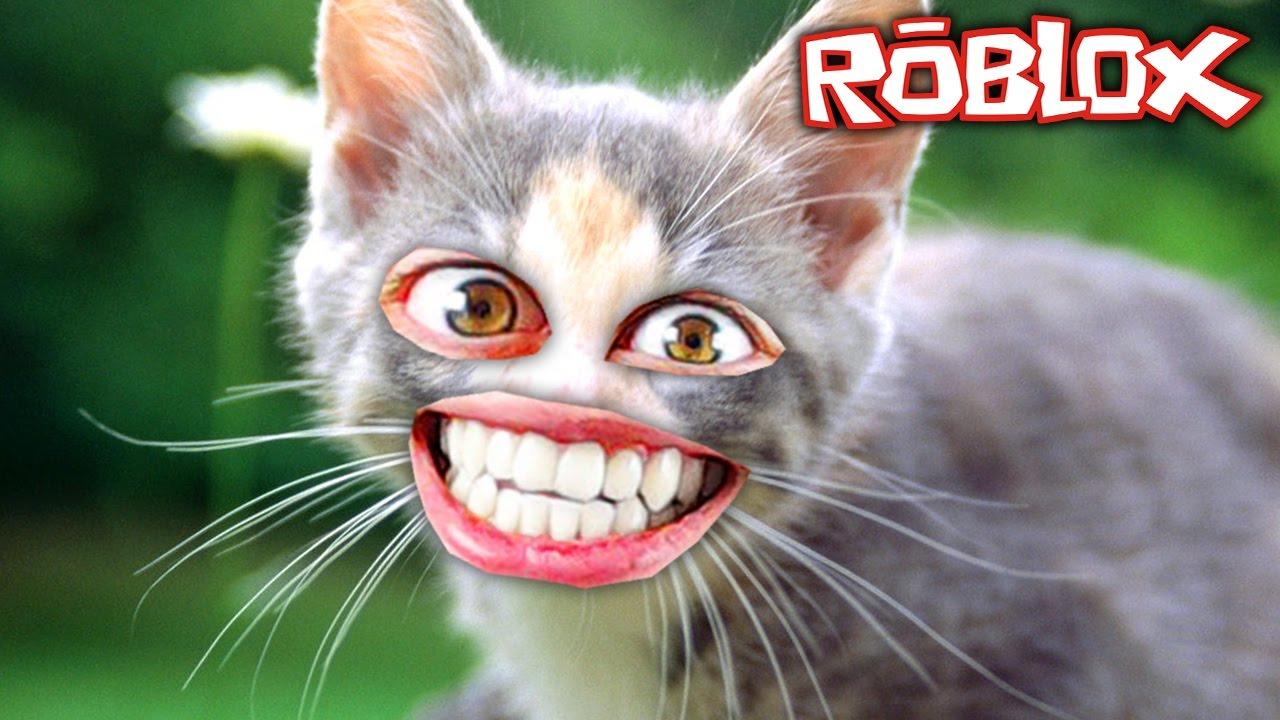 c0e844e5d The cutest kitten in Roblox - YouTube