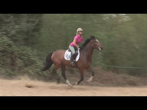 How To Position Your Horse To A Gallop