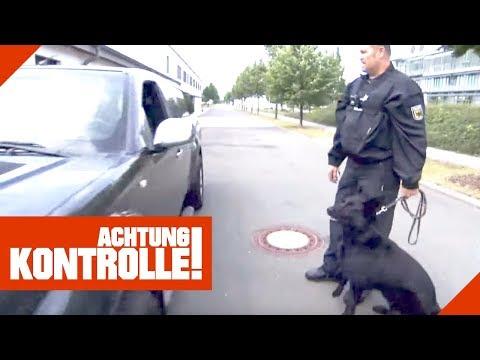Die Hundestaffel der Polizei! Wie gut können Hunde helfen?   Achtung Kontrolle   kabel eins