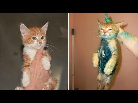 Смешные кошки коты смешные за 21 января