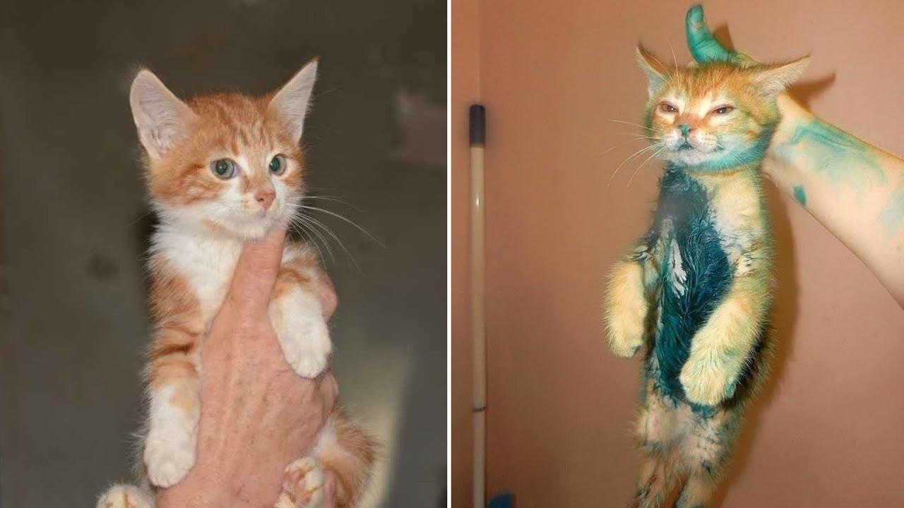 СМЕШНЫЕ КОТЫ 2019 Новые Приколы с котами и кошками Смешные кошки МатроскинТВ