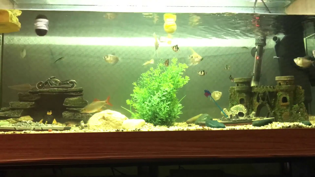 Best Tropical Community Tank Fish Turtle Crab Lobster Cray