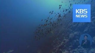 팔라우, 산호에 유해한 선크림 금지 / KBS뉴스(Ne…