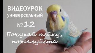 """Учим попугая говорить. Урок №12: """"Почухай шейку, пожалуйста"""""""